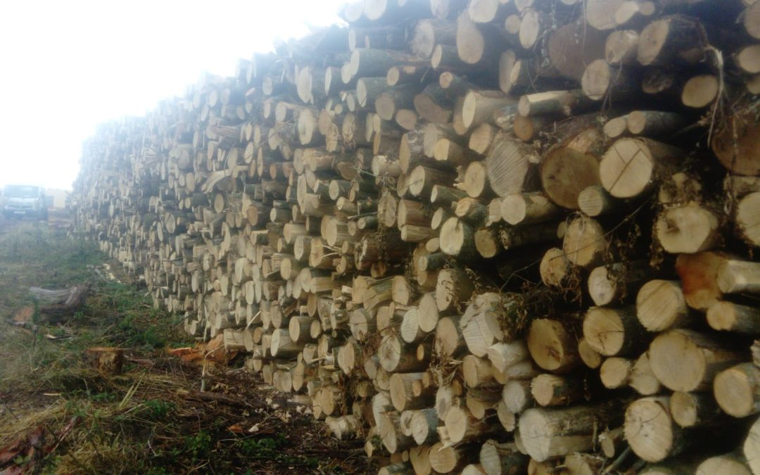 Logs delivered Andover, Winchester, Southampton