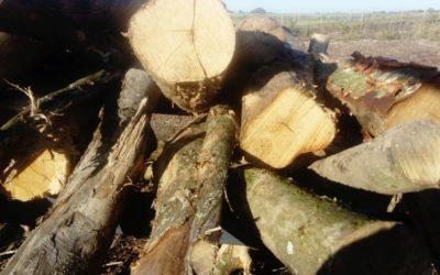Local Hardwood Species