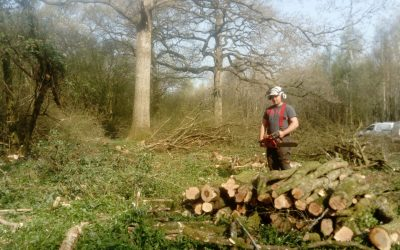 Hampshire coppice and firewood